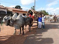 Festas de Carros de Boi: Os carros de boi cantaram na  8ª Festa do Carro de...