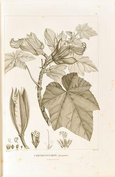 Human Ecology, Rare Words, Science And Nature, Botany, Mammals, Vintage World Maps, Flora, Illustrations, Paris