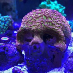 Aquarium Care Tips for Saltwater Fish Coral Reef Aquarium, Saltwater Aquarium Fish, Saltwater Tank, Marine Aquarium, Marine Fish Tanks, Marine Tank, Reef Aquascaping, Coral Fish Tank, Nano Reef Tank