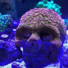 Aquarium Care Tips for Saltwater Fish Saltwater Aquarium Setup, Coral Reef Aquarium, Saltwater Fish Tanks, Marine Aquarium, Marine Fish Tanks, Marine Tank, Reef Aquascaping, Coral Fish Tank, Nano Reef Tank