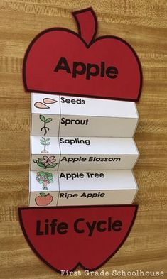 Kids learn all about the life cycle of an apple with this packet of activities to learn about the growth of an apple It includes posters booklets vocabulary cards and pri. Kid Science, Science Experiments Kids, Physical Science, Science Lessons, Art Lessons, Preschool Learning Activities, English Activities, Kids Learning, Preschool Kindergarten
