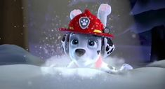 Diy Toys For 1 Year Old, Paw Patrol Pups, Kids Indoor Playground, Marshall, Fan Art, Entertaining, Children, Ears, Wallpapers