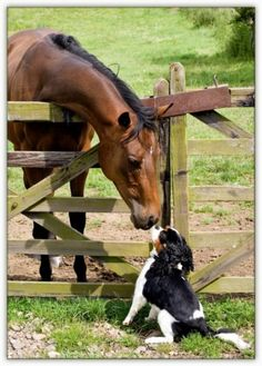 Horse with a Cavalier King Charles Spaniel