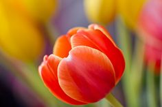 Nourish Your Soul Thursday Quotes, Red Tulips, Flower Wallpaper, Peonies, Beautiful Flowers, Photos, Rose, Instagram Posts, Plants