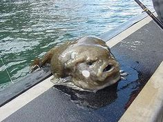 a Blob fish...MORE LIKE AN ALIEN WTF IS THIS? I will never swim in the ocean again