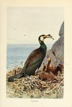 Brehms Tierleben: Allgemeine kunde des Tierreichs, Vol VI, Alfred Edmund Brehm, 1911.