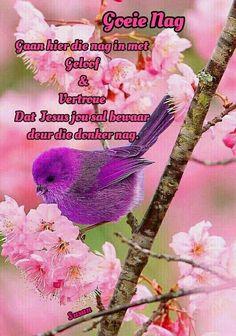 Small Bird Tattoos, Black Bird Tattoo, Pretty Birds, Beautiful Birds, Pet Bird Cage, Summer Nature Photography, Purple Bird, Flying Flowers, Good Night Blessings