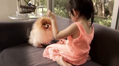 fluffyMoi offers everything for your cute & special pet. We provide products & services for premium pet toy dogs & cats. Join us to protect your pet.