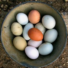 """Is there anything more intrinsically farmgirl than a bowl of fresh warm eggs from your own flock of well loved chickens?"" <3"