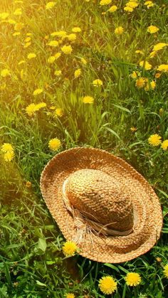 Hat On Green Grass And Yellow Dandelions