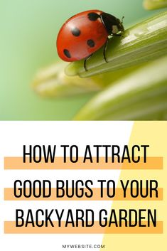 I've been wanting to know more about growing vegetables while attracting pollinators and this article has helped me out so much. A great way to find the right plants and learn how to grow the right plants in your backyard vegetable garden beautifully! Starting A Vegetable Garden, Vegetable Garden For Beginners, Backyard Vegetable Gardens, Gardening For Beginners, Growing Flowers, Planting Flowers, Butterfly Weed, Poisonous Plants, Colorful Plants