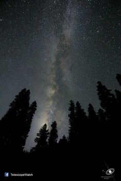 The Summer Milkyway captured from Yousmarg, Jammu and Kashmir.  Peeping behind the Chenar trees in viscinity, one can see the billions of stars form a milky path in the sky, distinct from the thousands of other stars in its viscinity.  Few people believe the fact that all the stars that we see are actually a part of our home galaxy, the milkyway.  After several cloudy nights in Kashmir, Photographer Rishabh Jain took this photo after walking down a dark road on a moonless night in Sloth bear…