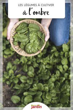 Votre jardin est ombragé ? Pas de panique, de nombreux légumes préfèrent l'ombre #légumes #potager  #ombre #cultiver