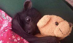 #cute #baby #bat