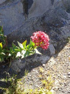 Belle Fleur à Chilhac ...! ! !
