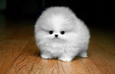 Cutest cut!