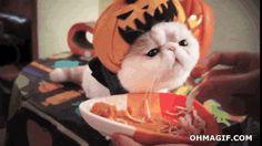 Devaneio Cotidiano: #NationalCatDay - Gatos que também querem comemora...