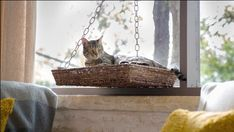 DIY the Window Seat of Your Favorite Feline's Dreams Cat Window Perch, Cat Perch, Dog Tent, Dog Ramp, Old Baskets, Diy Dog Bed, Animal Projects, Diy Projects, Rugs On Carpet