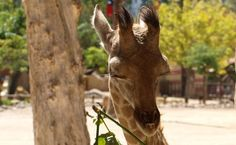 Bébé, Jardim Zoológico de Lisboa