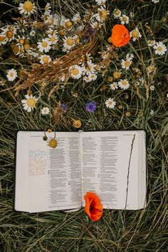 open book on green grasses photo – Free Plant Image on Unsplash Book Flowers, Plant Images, Free Plants, Open Book, Hd Photos, Cool Pictures, Daisy, Wallpaper, Inspiration