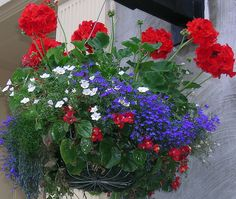 Hanging Basket / lovely combination / red-white-blue