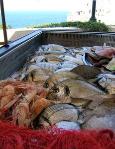 Campania fish market