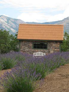 Lavender farm in Eden, Utah