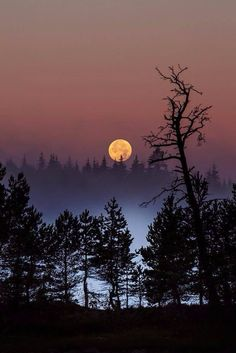 Beautiful moon on a foggy night. Beautiful Moon, Beautiful World, Beautiful Places, Moon Pictures, Pretty Pictures, Full Moon Photos, Moon Photography, Landscape Photography, Photography Tricks