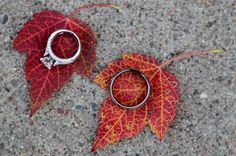 Wedding rings on fall leaves from Mosinee, Wisconsin fall wedding photography.