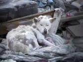 A Dying Dog in a Trash Pile is Found - the End of This Rescue Will Make You Cry ♥ Please Support Hope for Paws or a rescue in your area. Please support your local low cost spay and neuter clinic!