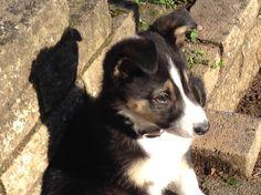 New puppy Maddy