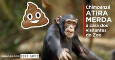 Não dominando a expressão oral, este chimpanzé demonstrou uma perfeita…