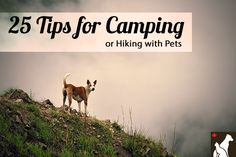 25 Tips for hiking/camping with pets