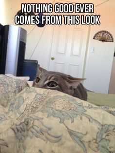 Freakin' cat...