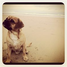 Pugalier on the beach