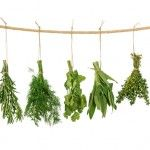 How To Dry Basil Leaves-I need to remember this.