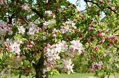 apple blossom wedding color inspiration
