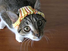 Ravelry: A Hat for A Cat pattern by Sara Thomas