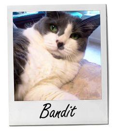 Pet of the Week is Bandit! #POTW