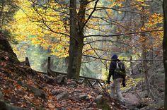 https://flic.kr/p/AjFz7G | The Golden Tree, Black Forest, Germany