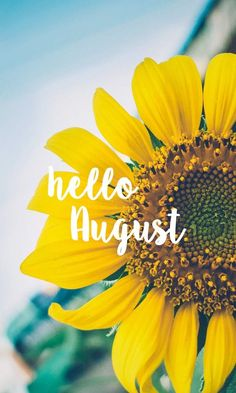 Hello August Sunflower bright happy background August 2016 wallpaper you can… Seasons Months, Days And Months, Months In A Year, Summer Months, Summer Days, Phone Backgrounds, Wallpaper Backgrounds, Iphone Wallpaper, Pretty Backgrounds