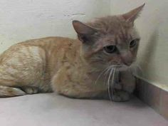 TO BE DESTROYED 4/14/14Brooklyn CenterMy name is JAYSON. My Animal ID # is A0995954. UPDATE: ***GONE BUT NOT FORGOTTEN***