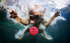 "Images from the series ""Underwater Dogs"", American photographer Seth Casteel"