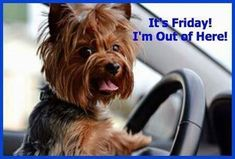 Are you looking for images for good morning beautiful?Check this out for very best good morning beautiful ideas. These funny quotes will bring you joy. Friday Dance, Friday Yay, Friday Weekend, Friday Humor, Happy Weekend, Finally Friday, Weekend Gif, Friday Facts, Good Morning For Him