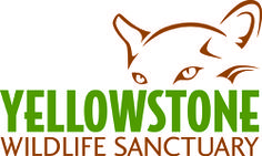 Yellowstone Wildlife Sanctuary-Primary focus is to educate the public about the protection and conservation of Yellowstone ecosystem wildlife and natural habitats #travel
