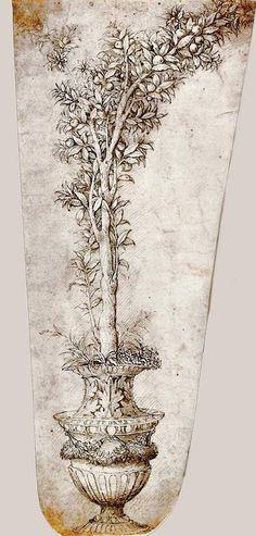 By Mantegna, Andrea – Orange tree in a vessel