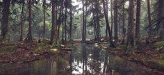 #CryEngine - Forest Lighting Study by Damian Stempniewski