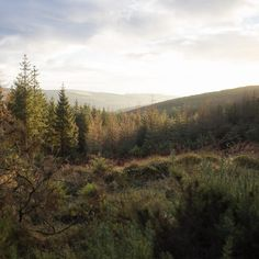 Knockrath Forest Sunrise #sunrise #forest #wicklow #ireland #nature #outdoors #wanderingshane