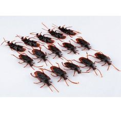 Plastic Cockroaches: 50 pack for $7.99