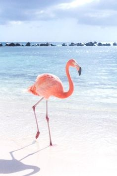 Pink Flamingo Wallpaper for iPhone and Android Beautiful Birds, Animals Beautiful, Cute Animals, Baby Animals, Jolie Photo, Pink Flamingos, Flamingo Beach, Flamingo Photo, Ocean Beach